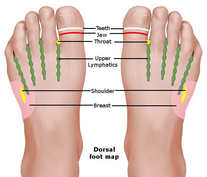 Reflexology Foot Chart - Dorsal Map