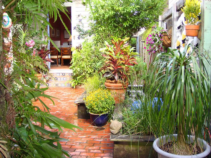 90 best small courtyard garden ideas images on pinterest for Small trees for courtyard gardens