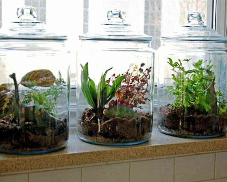 glass jar terrariums for my kitchen window ledge