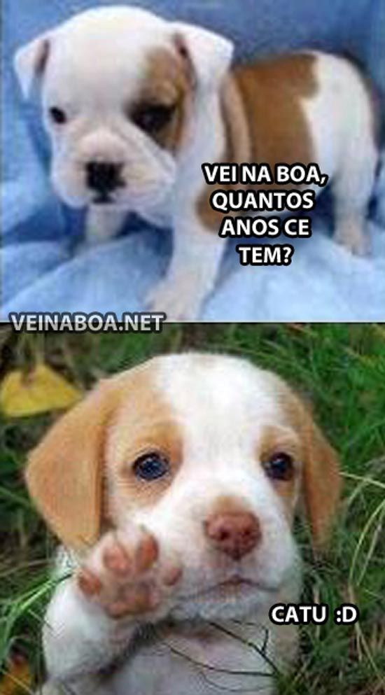 QUEM RESISTE A ESSAS FOFURAS? <3 <3 <3 #petmeupet #filhode4patas #maedepet #maedecachorro #paidecachorro #cachorro