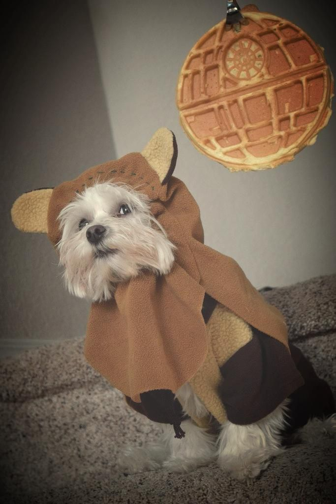 My mom was out of town for Thanksgiving, so I used her dog and my newly acquired Death Star waffle maker to create this masterpiece...