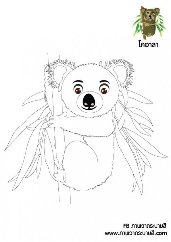 ระบายส โคอาลา โคอาลา ส ตว เล ยง แมว
