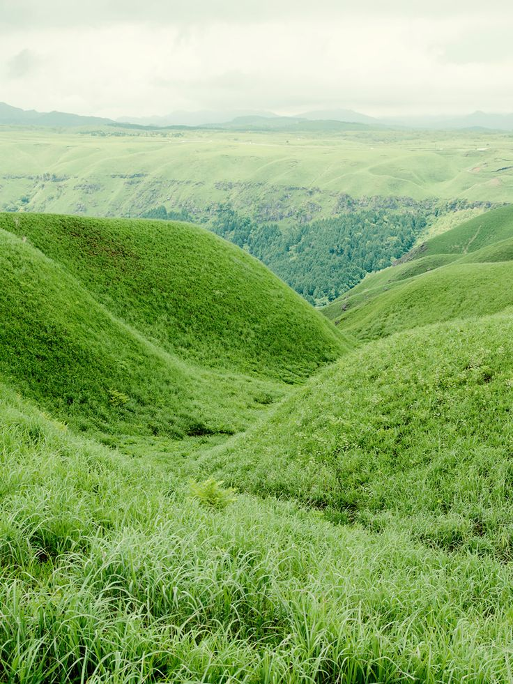 thesthr: Green Things, Peace Places, Green Fields, Beautiful Places, Grass Fields, Beautiful Green, Dreams Land, Green Valley, Green Colors