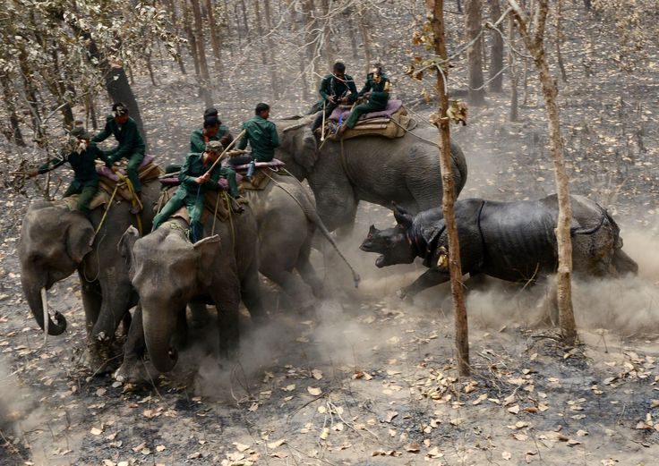 Best photos of the day: Hindus gather and an angry rhino
