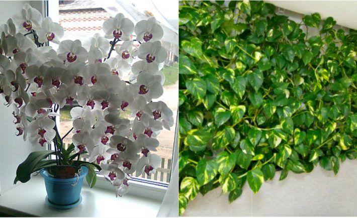 Chcete aby vaše rastlinky kvitli rýchlejšie a boli krajšie? Urobte si doma toto kúzelné hnojivo. Odporúčajú ho aj záhradkári