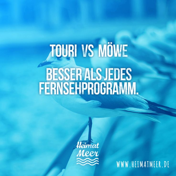 Touri vs Möwe <3 Besser als jedes Fernsehprogramm. // Mee(h)r vom Meer>>