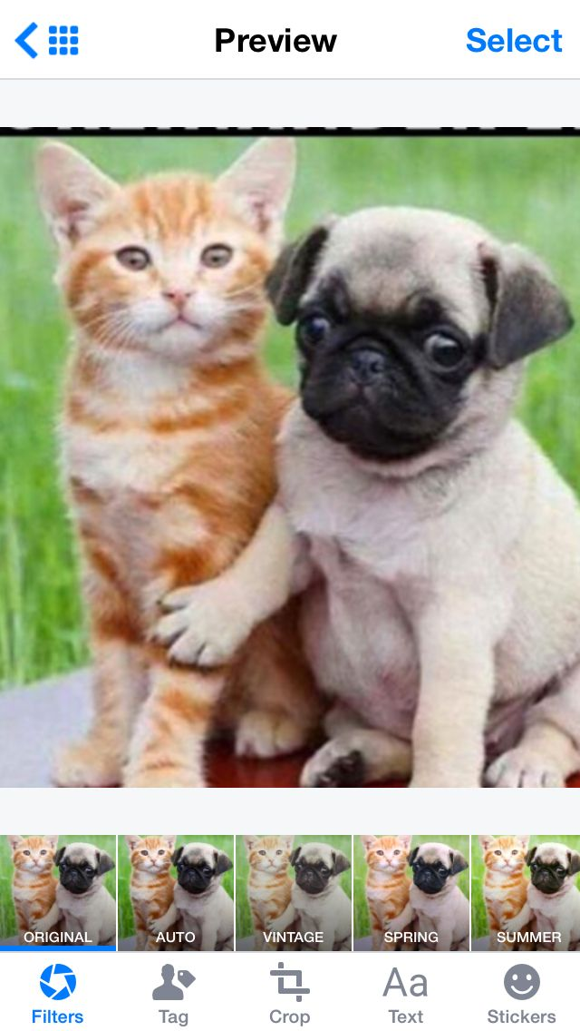 Love puppies and kittens