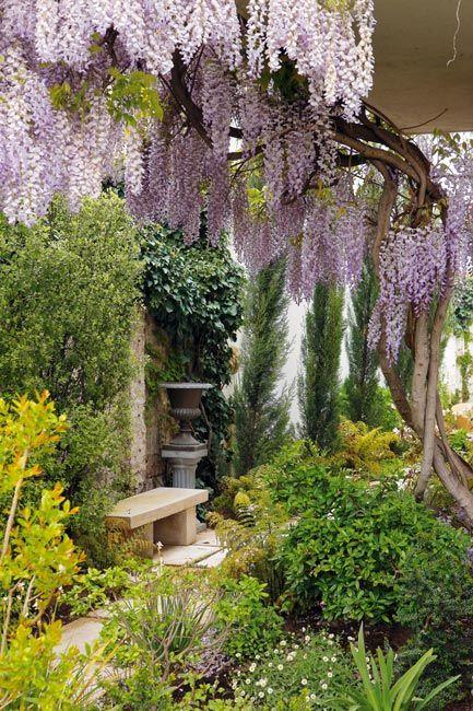 Wisteria: Gardens Ideas, Secret Gardens, Plants, Backyard, Beautiful Gardens, Flower, Back Yard, Wisteria Trees, Gardens Benches