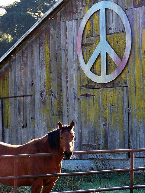 peace, barns, & horses :)