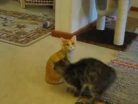 Kitten Attack Ceramic Cat