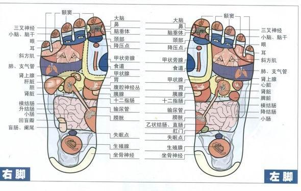 反射疗法-吴若石新足部健康法