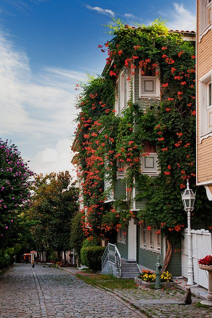 Flowers line the houses along the street leading towards Hagia Sophia and the Blue Mosque, Istanbul, Turkey