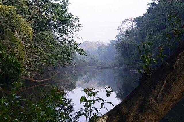 Kerala Culture: An Organic Farmstay Experience In India