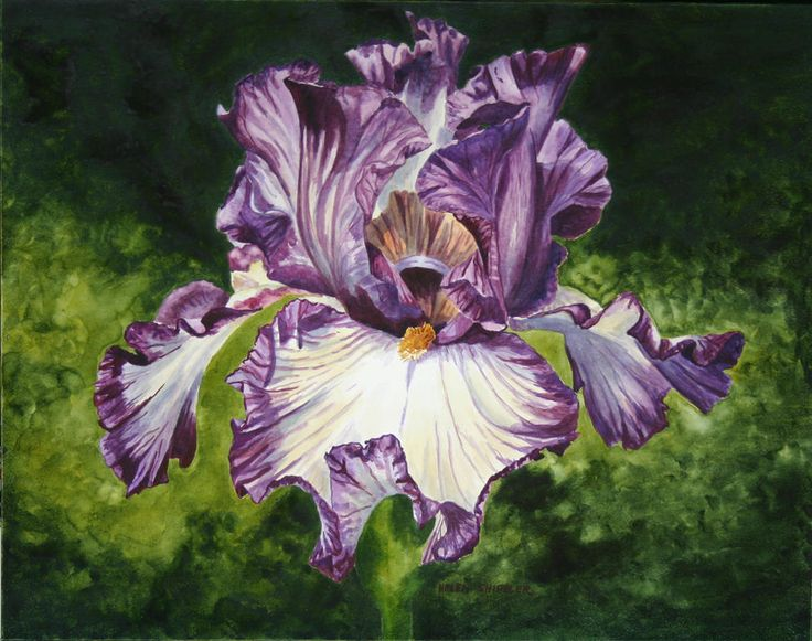 Iris Painting Acrylic Google Search Iris Painting