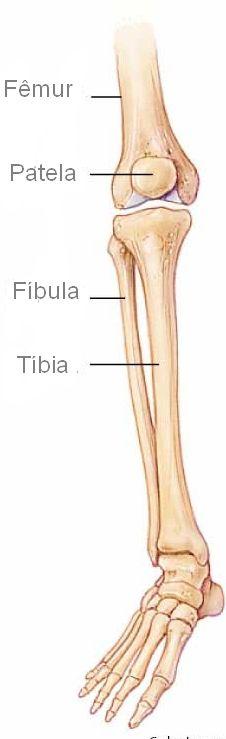 Ossos da perna