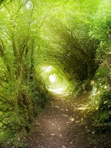 the path to the village stretched out in a green tunnel