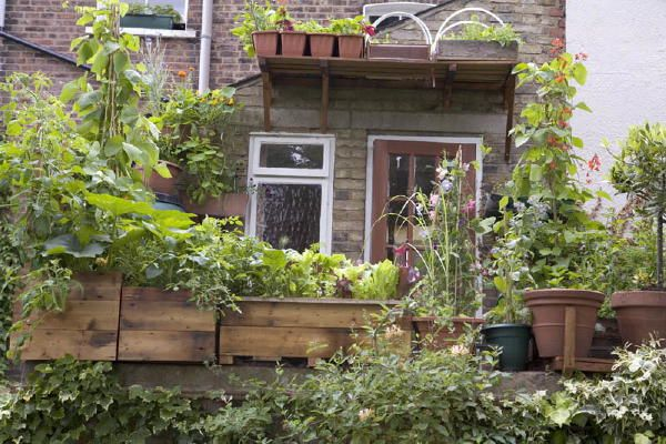 Vertical Veg is on a mission to inspire and support everyone who doesn't have a garden to grow food. Here you'll find ideas, inspiration and practical advice on how to do it.