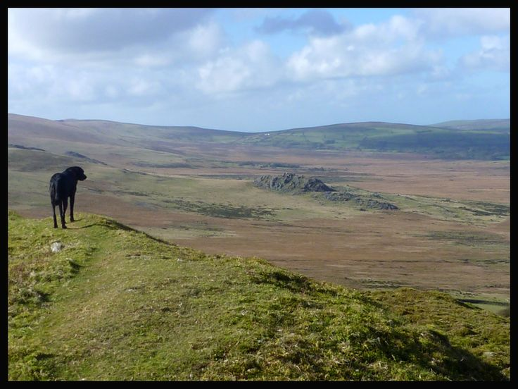 Topsy admiring the landscape - Preseli hills in West Wales