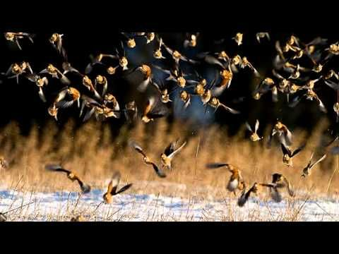 Besides - Linnet's flight