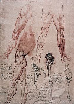 Comparative study of human and horse legs (1506)