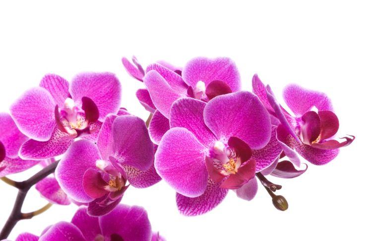 orchidée - Recherche Google