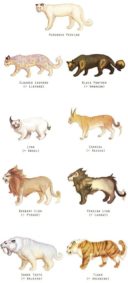 Different Breeds Of Cats Pattern