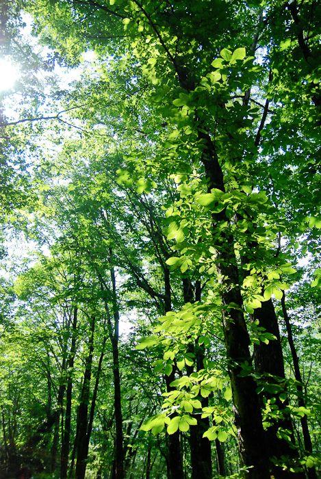 手を振っているみたいに、透き通る葉がキラキラと揺れる。