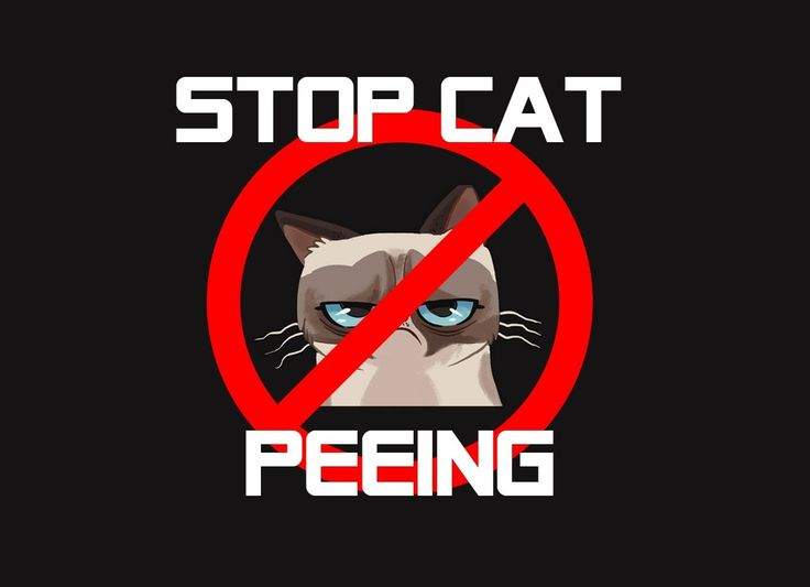 Stop cat peeing on furniture