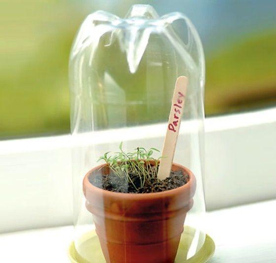 Mini estufas estimulam o crescimento e deixam as folhas bem mais verdes!
