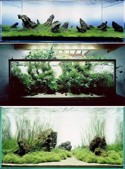 Een paar mooie voorbeelden van wat via aquascaping mogelijk is. Ook een tropisch zoetwateraquarium kan oogverblinden zijn!