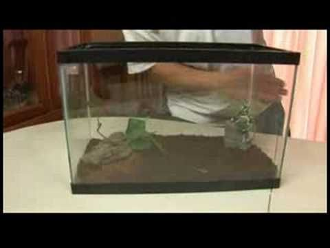 Reptiles, Amphibians, Invertebrates & Small Pets : Chilean Rose Hair Tarantula Facts