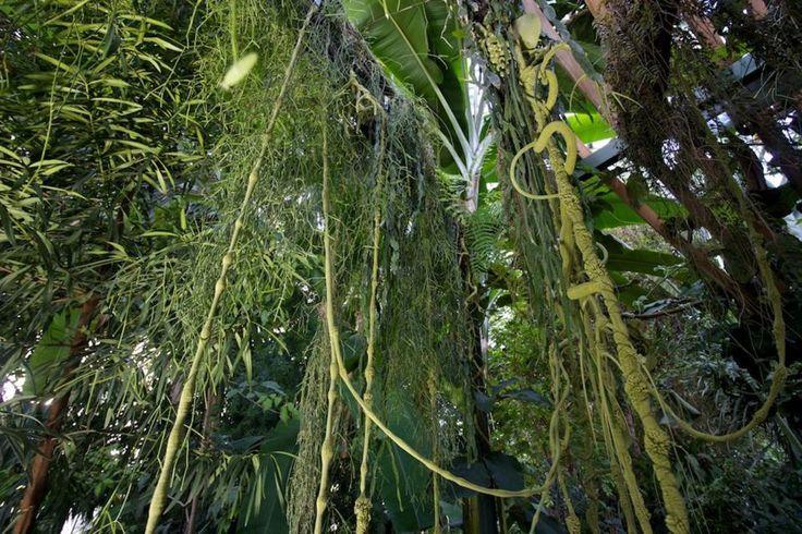 Exposition Noces Végétales : Mizug, les lianes siliconées se confondent ave la faune de la serre
