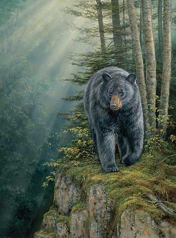 Rocky Outcrop-Black Bear by Rosemary Millette  |  Wild Wings