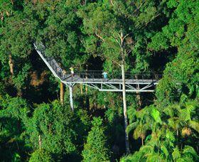 Mt Tamborine -Rainforest, Hinterland