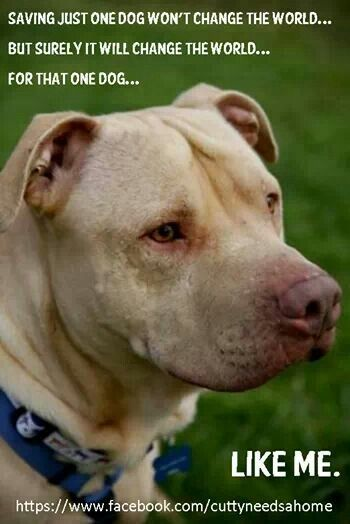 choosing mans best friend guide canine companions