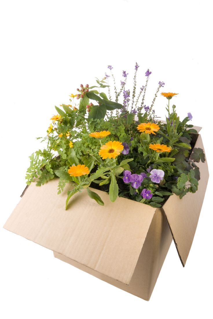 How To Ship Plants: Tips And Guidelines For Shipping Live Plants By Mail