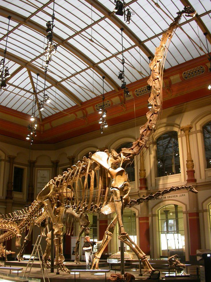 #Giraffatitan brancai, Humboldt Museum für Naturkunde, Berlin