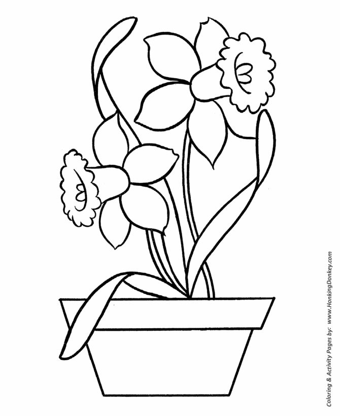 Easy Coloring pages   Daffodils in Pot