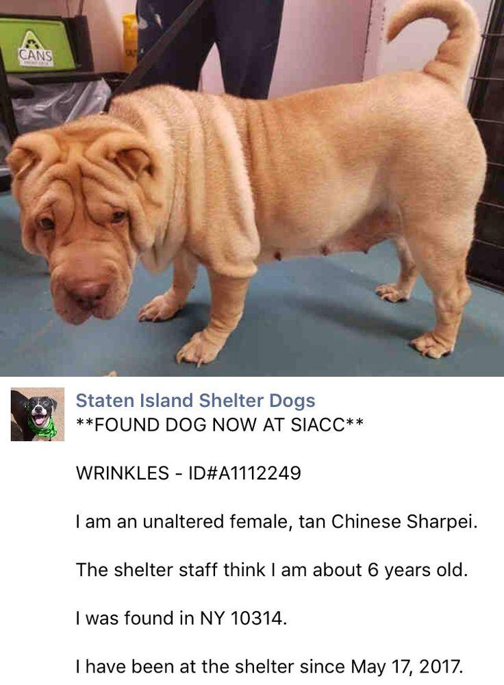 5/17/17 Staten Island WRINKLES A1112249 /ij