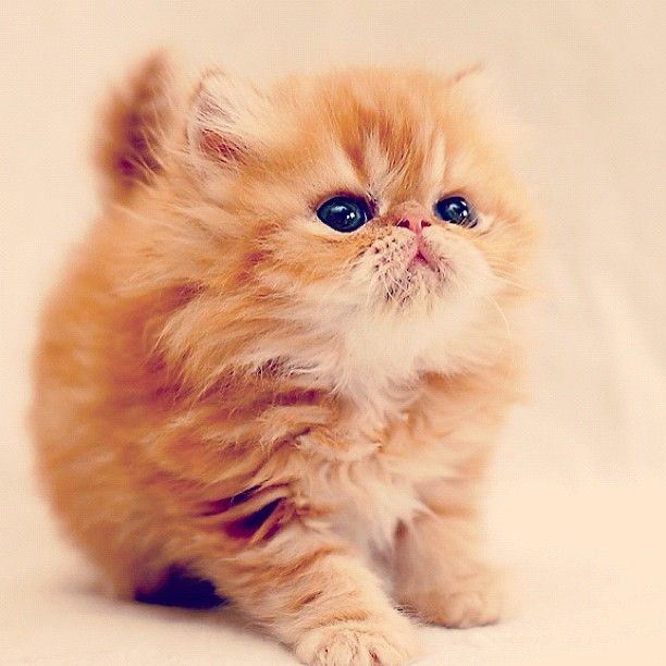 I want this cat!!!