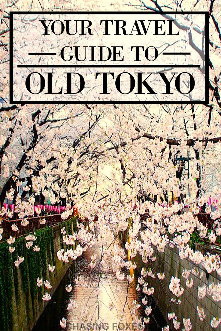 This is such a GREAT travel guide to Tokyo! I'm so glad I read this before visiting! Now I know the best spots to hit up! And the festivals look like so much fun! SO putting this on my bucket list! I can't wait!