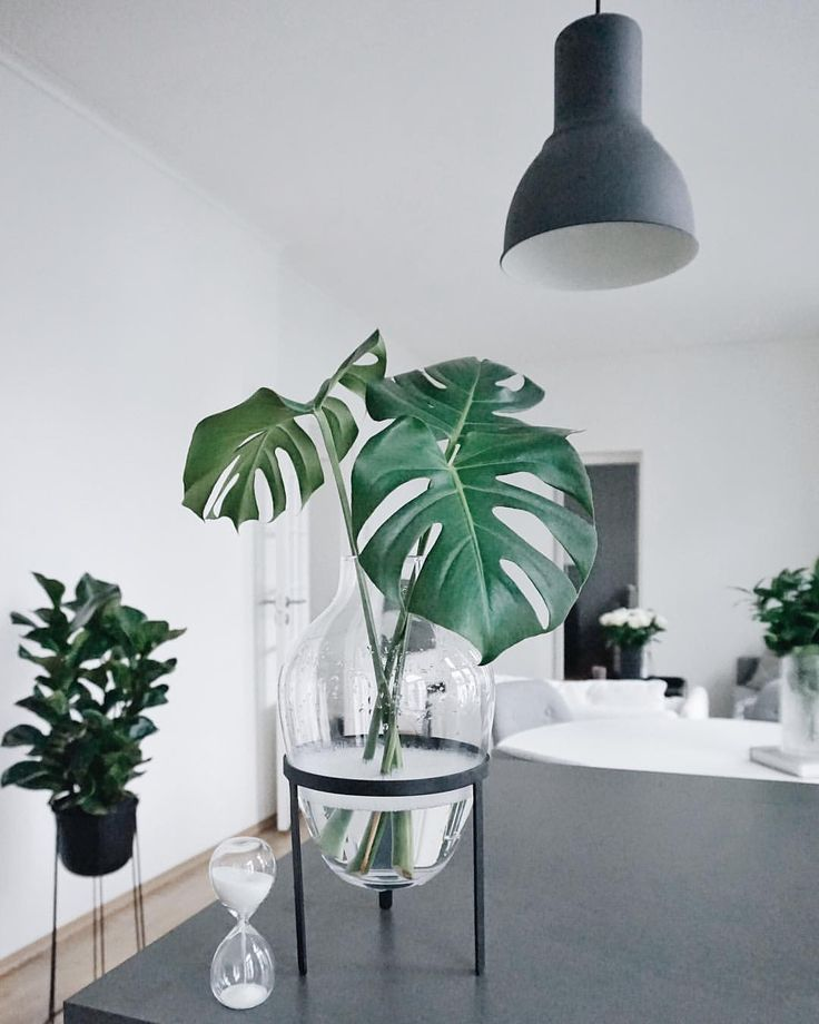 "- Interiør | Planter | Interior (@egilfarstad) on Instagram: ""F Λ V O R I T Ξ V Λ S Ξ 🍃 Love my new vase from @bysundestudio at @devoldfabrikken 🖤 It's perfect…"""
