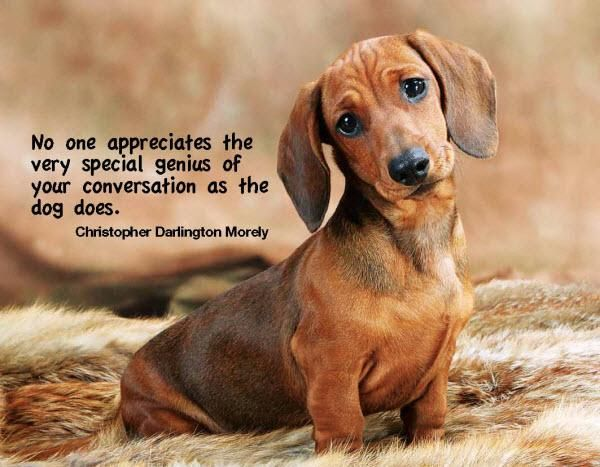 My mother is a genius ♥ #doxie