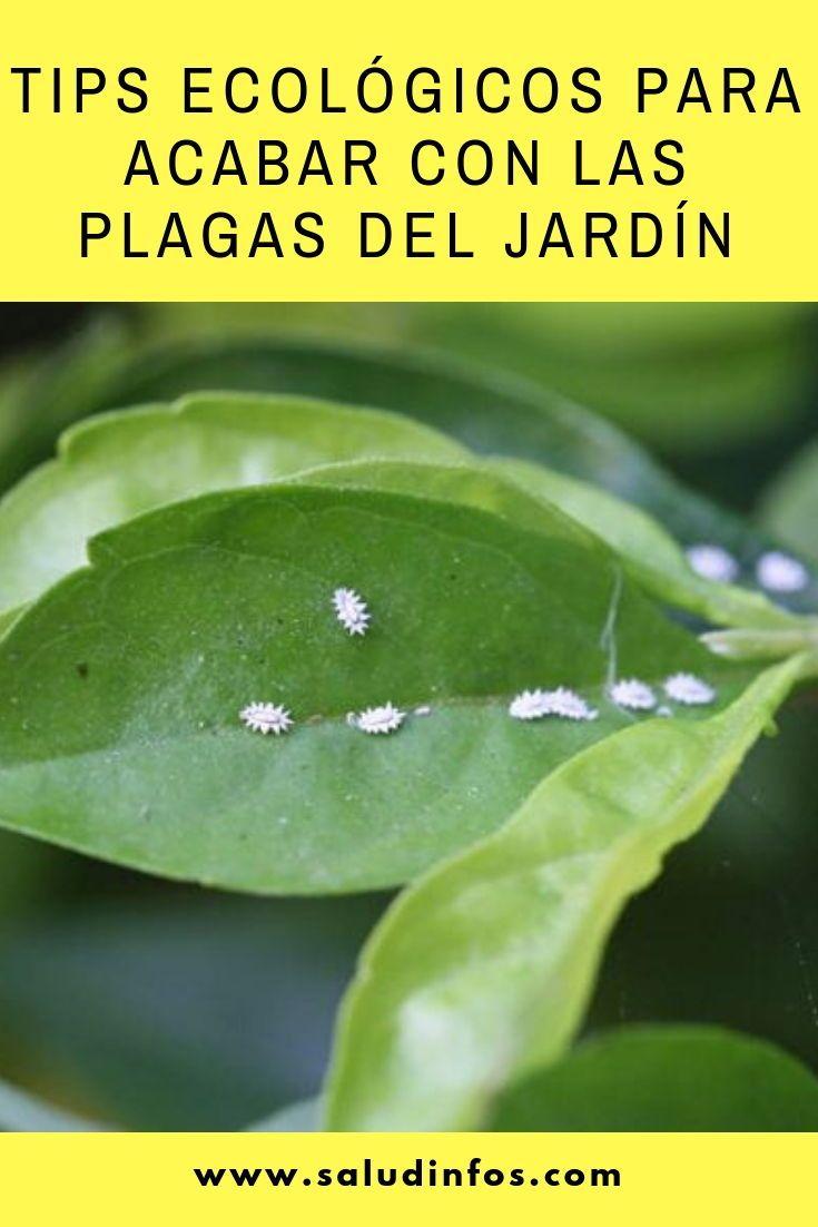 Tips ecológicos para acabar con las plagas del jardín #ecológicos #plagas #ja…