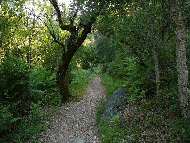 Camino de Valdelarco a Navahermosa