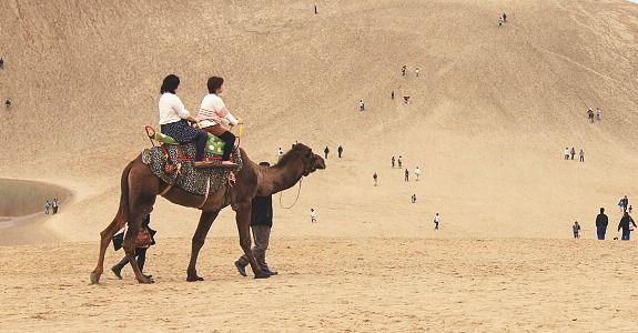 Tottori Travel: Sand Dunes  Ride a Camel!!!