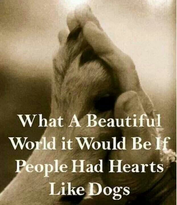 What a beautiful world it would be if people had hearts like dogs  lt 3