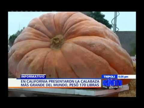 Presentaron la calabaza más grande del mundo en California; pesó 170 lib...