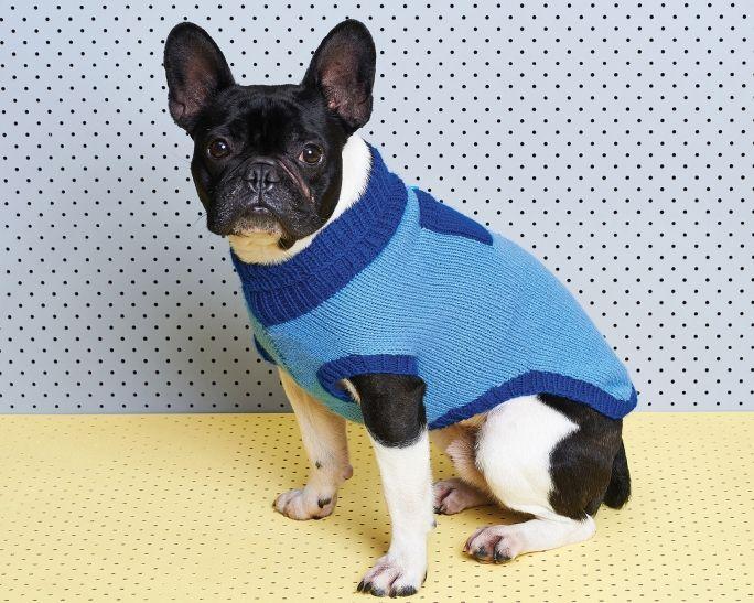 42 best ropa images on Pinterest | Perros pequeños, Perritos y ...