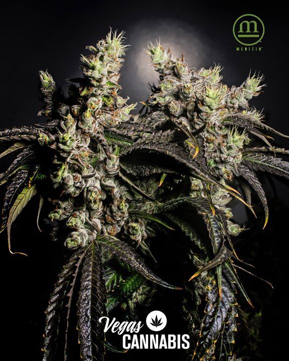 We always thought it looked like they were get ready to fight over who gets the best light and best nutrients from Medizin. - What do you think Best Buds or Worst Enemies? - #bestbuds #weedporn #weedstagram #medizin #centerfold #lovers #haters #plantlife #plantfather #cultivation #plantsoverpills #plants #vegan #vegetables #veggies #vegas #vegaslocals #dispensaries #buds #nuglife #nevada #california #dizzywright #dizzy #the702ep #dispensary #strainoftheday #pic #picoftheday #agencythc #dank…